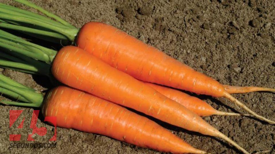 La Zanahoria Y Sus Propiedades Alimenticias 45 Segundos Y descubre más de 6 millones de fotos de stock en freepik. sus propiedades alimenticias